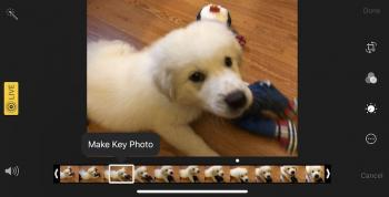Rescue Blurry Photos With Live Photos In IOS 11 TidBITS podcast