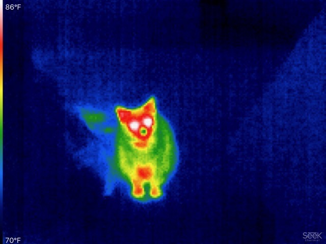 A thermal image of a cat.