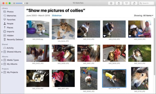 Searching for collies in Photos