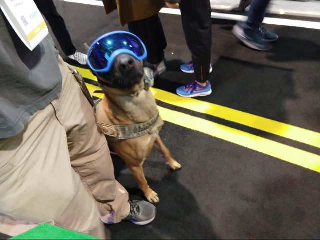 A dog wearing goggles.
